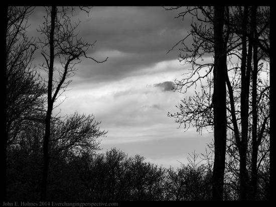 140504-145050_Trees-Edit