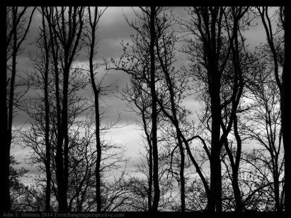 140504-145208_Trees-Edit
