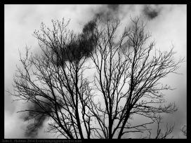 140504-145346_Trees-Edit