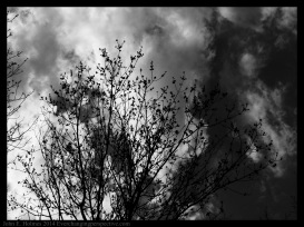 140504-145501_Trees-Edit