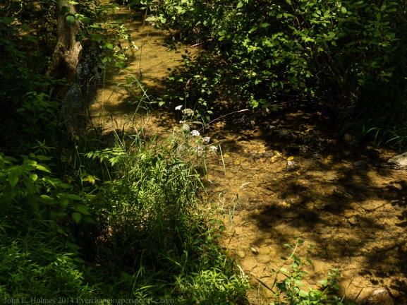 140716-133959_Plum Creek