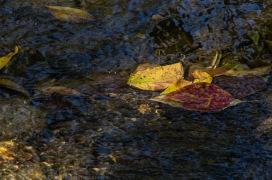 141012-140939_Plum Creek