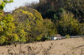 141025-103812_Plum Creek