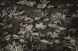 141207-115232_Plum Creek-Edit