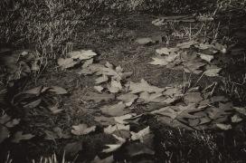 141207-115235_Plum Creek-Edit