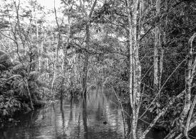 060329-075059-Amazon River