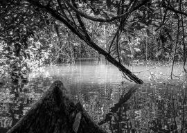 060331-125037-Amazon River