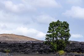 110929-151708_Hawaii